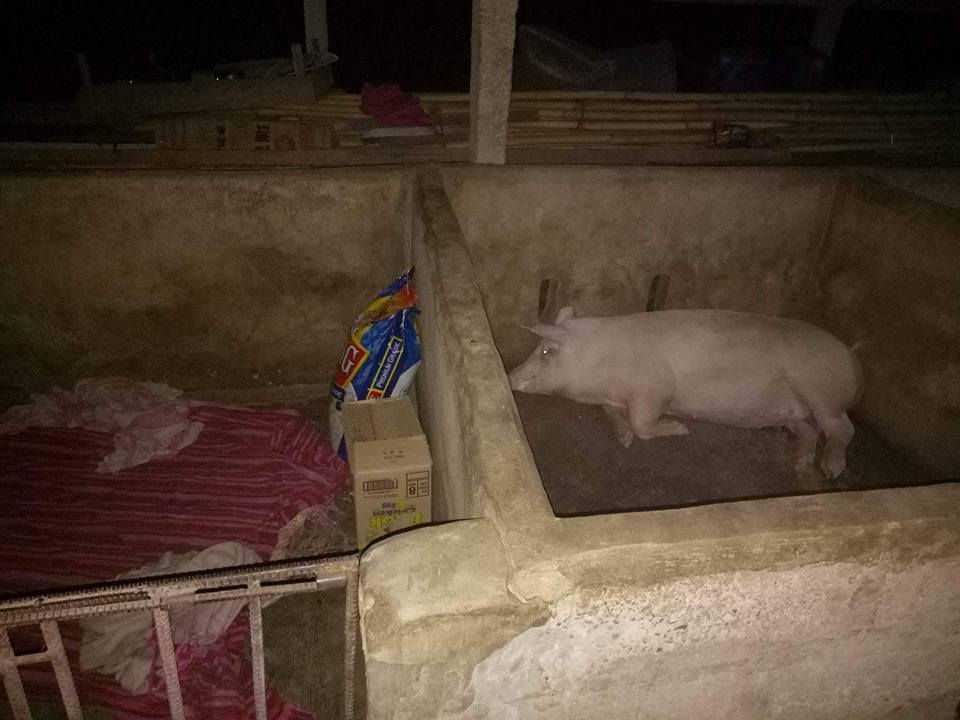 The siblings were forced to live in a pigpen after their parents abandoned them. [Image Credit: Jun Ramos/Facebook]